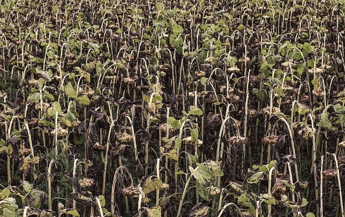 Does Your Skin Feel As Dry As This Field?
